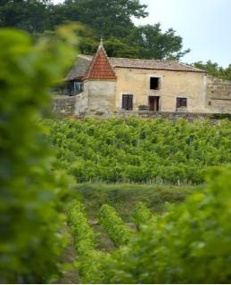Un été dans les vignes ! Castillon Côtes de Bordeaux.
