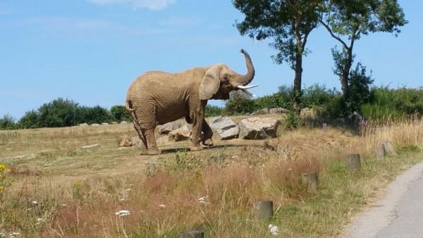 Au plus prés des animaux dans leur habitat. Impressionnant!