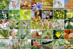 Les principales fleurs
