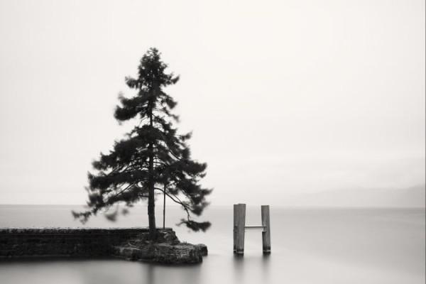 robert_arbre_sur_le_mur_lac_leman_le_bouveret_suisse_large