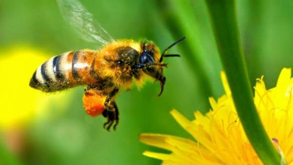Année catastrophique pour la récolte de miel