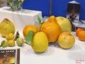 fete du citron Nice 2018 (16)
