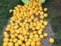 fete du citron Nice 2018 (7)