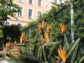 Hotel Orangeraie-Symbole de France (32)