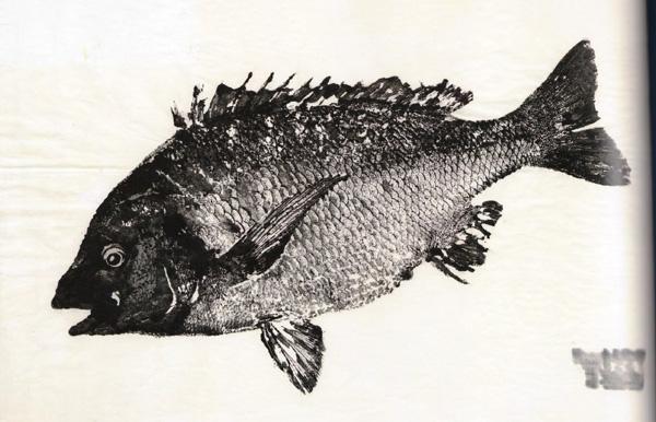 Takahiro Saito - Pagre à tête noire ©Musée océanographique de Monaco