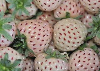 fraise ananas