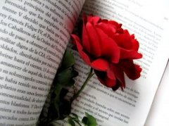 rose_passion_novel_244517_m