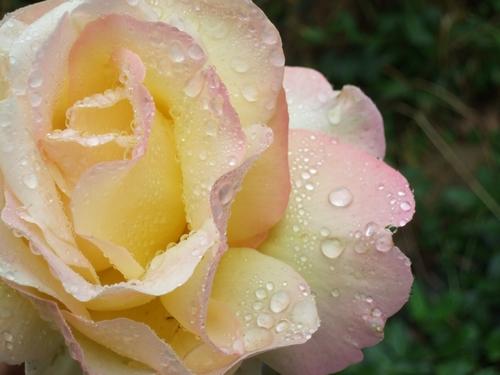 Concours Floralies Internationales 15
