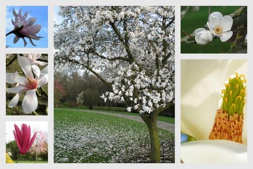 Concours Floralies Internationales 17