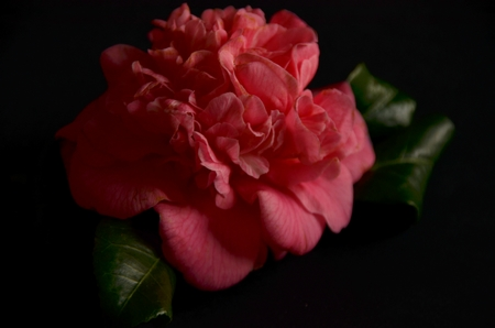 Concours Floralies Internationales 19