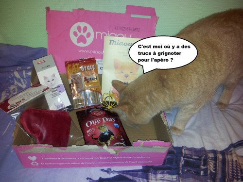 caramel et la miaoubox 3