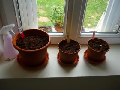 my city garden pot