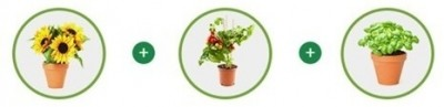 Image-plantes