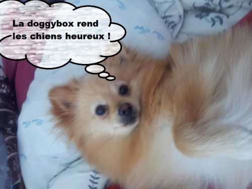 heaven et la doggy box 4
