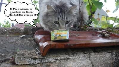 Sheba kitty box 1