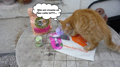 féfé kitty box 1