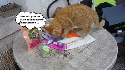 féfé kitty box 2
