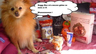 heaven doggybox 1