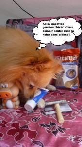 heaven doggybox 3