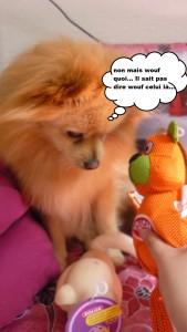 heaven doggybox4