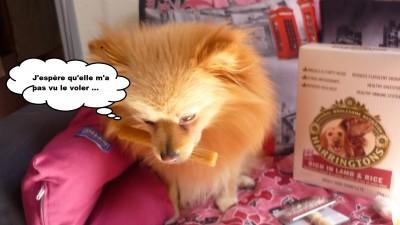 heaven doggybox5
