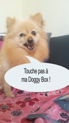 heaven doggy box 2