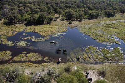 safari-aerienokavango