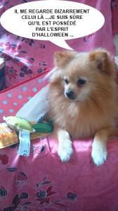 HEAVEN DOGGY BOX 3