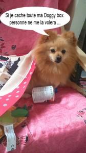 heaven doggy box 1