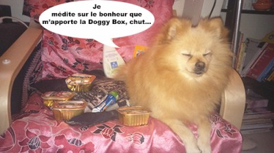heaven doggy box 3