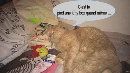 caramel 2 kitty box