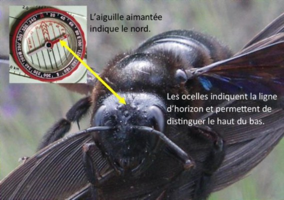 abeille en detresse