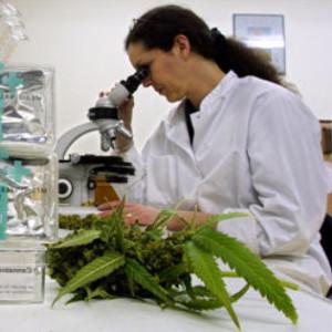 cannabis-et-sante