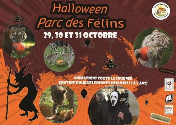 Halloween au Parc des Félins