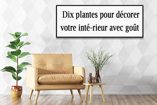 Plante pour decorer interieur