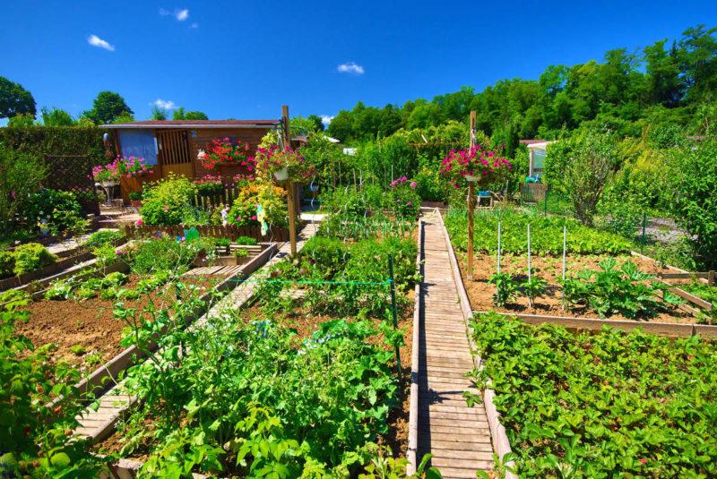 potager et jardins