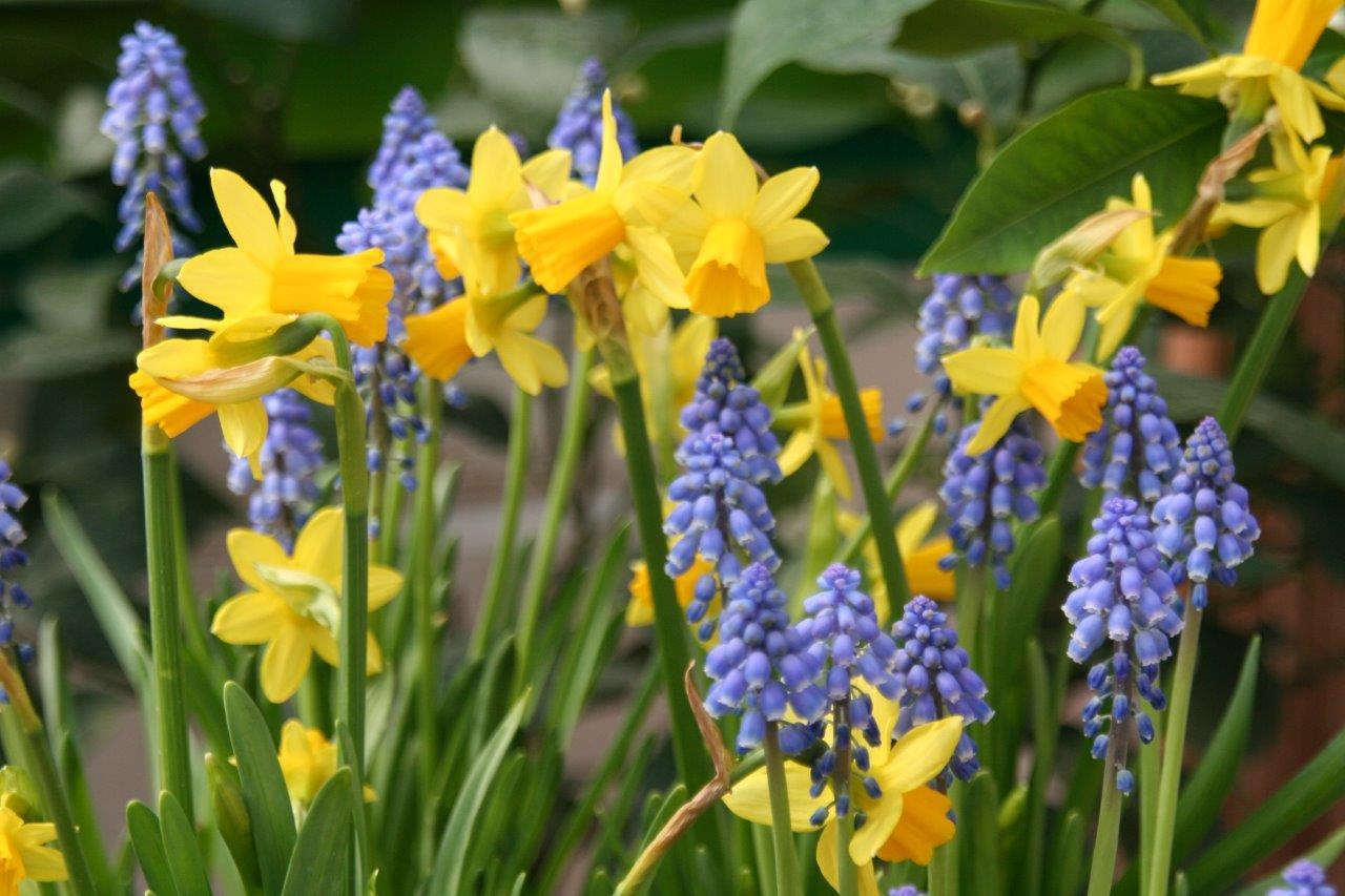 Doit On Deterrer Les Oignons De Tulipes octobre : c'est le moment de planter des bulbes -
