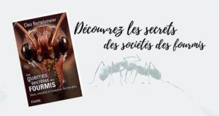 Les guerres secrètes des fourmis Cleo Bertelsmeier