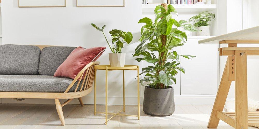 plantes en ligne
