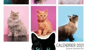 calendrier-2021-vie-secrete-des-chats-larousse
