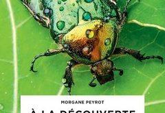 a-la-decouverte-des-insectes-larousse