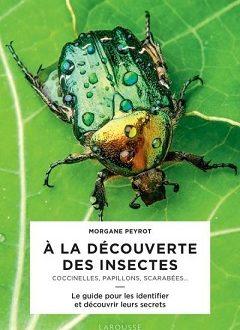 A la découverte des insectes