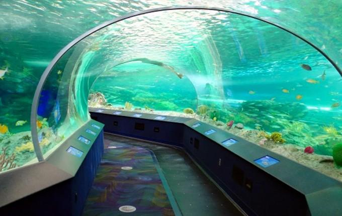 aquarium de la Nouvelle-Angleterre
